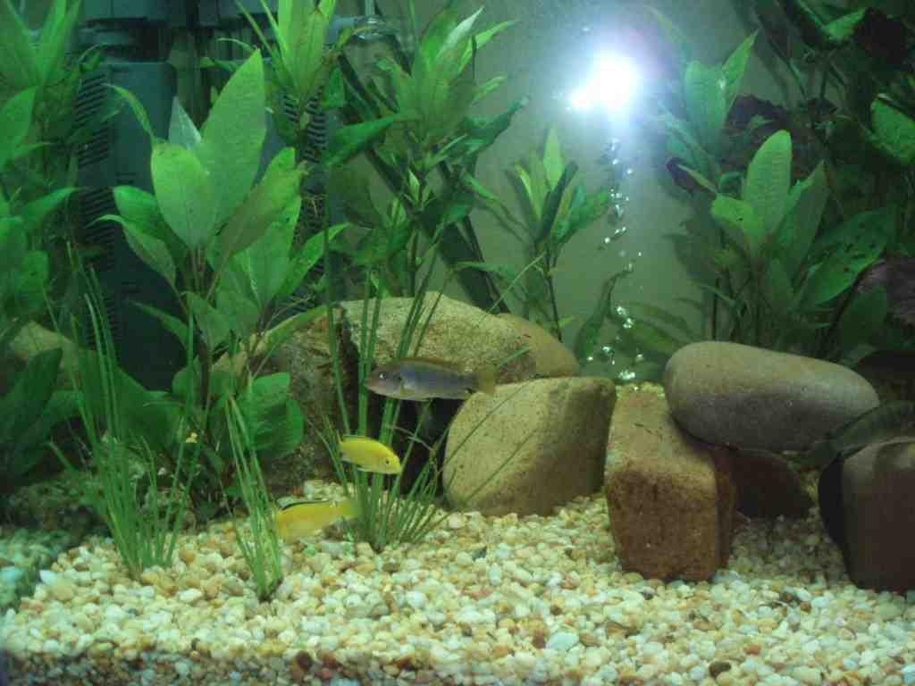 Cheap Aquarium Decorations