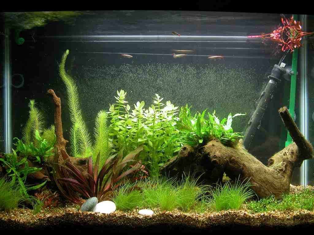 Cool Aquarium Decorations