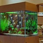 Discount Aquarium Decorations