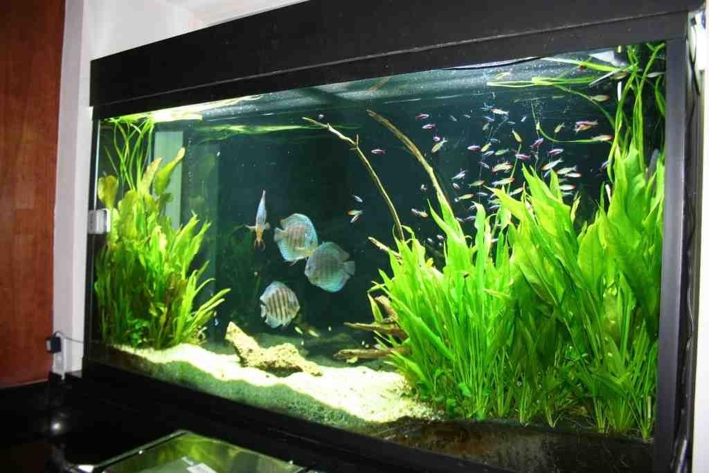 Freshwater Aquarium Decorations