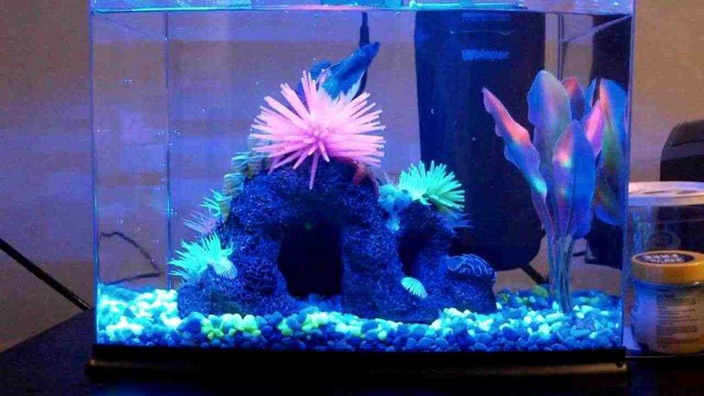 Glofish Aquarium Decorations