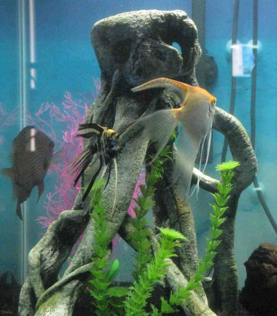 Top Fin Aquarium Decorations
