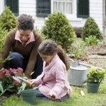 Gardening Basics How To Start A Garden