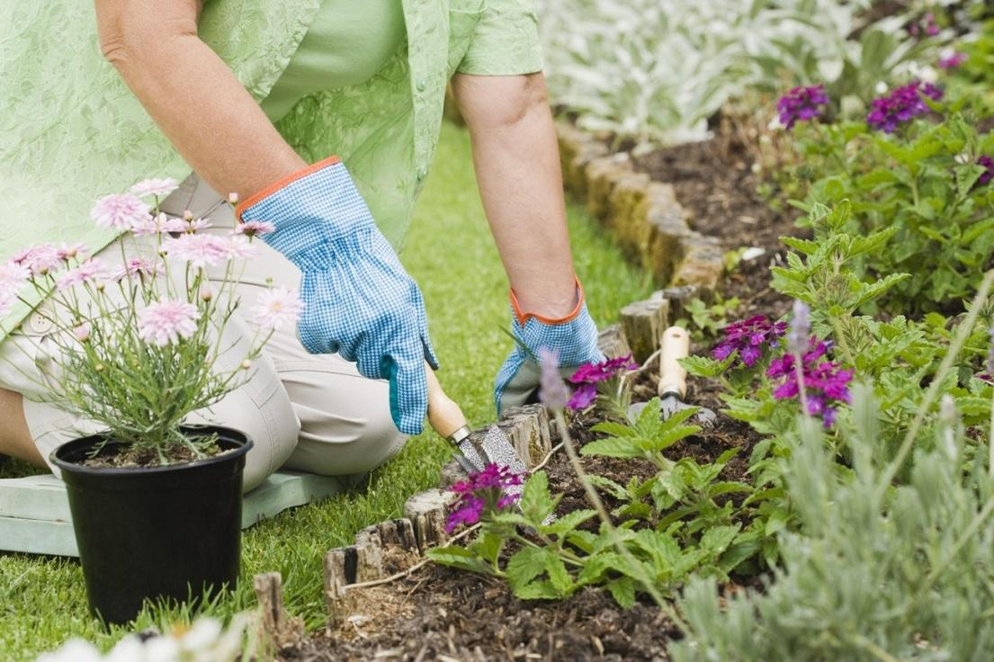 How To Start Your Flower Garden