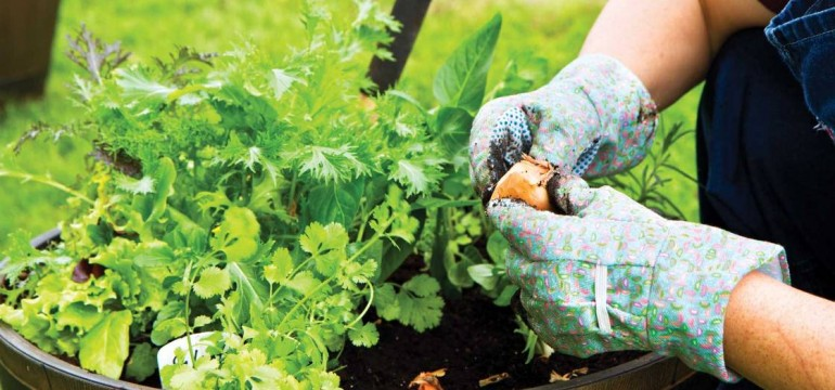 How To Start A Garden Gardening Tips And Advice