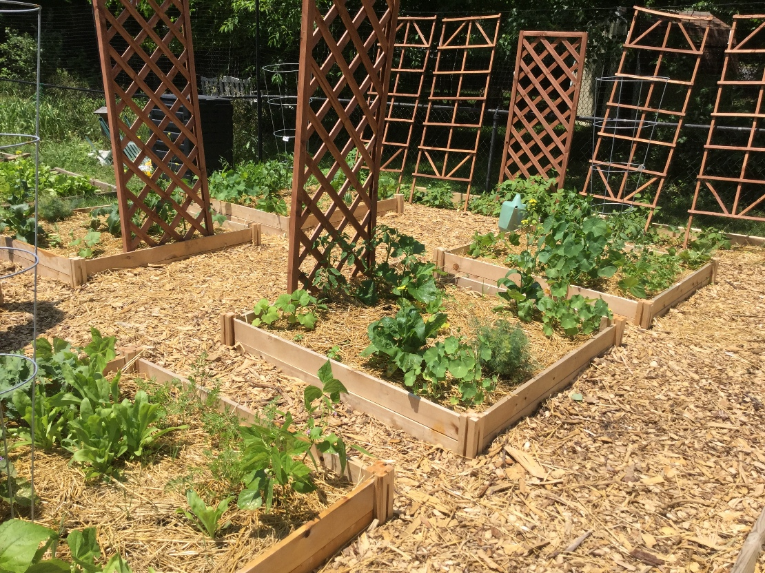 Starting Your Permaculture Garden