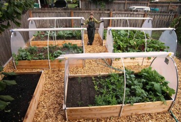 The Vegetable Gardening For Beginners