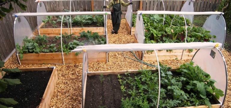 The Vegetable Gardening For Beginners