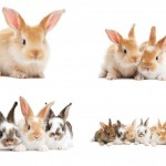 Baby Bunny Rabbits Wall Decal Sticker Set