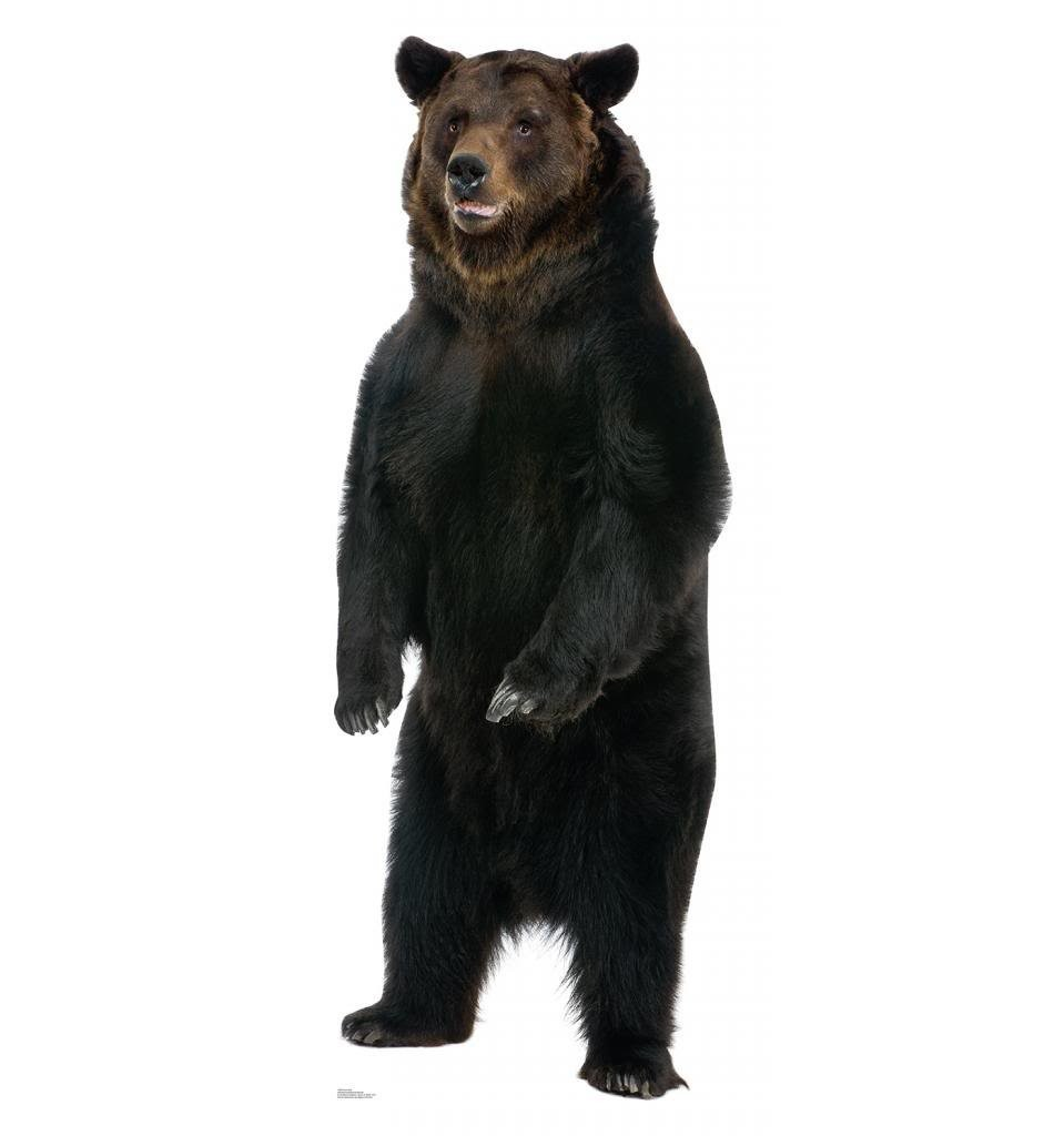Brown Bear Advanced Graphics Life Size Cardboard Standup